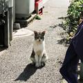 写真: 猫撮り散歩2005