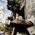 写真: 猫撮り散歩2006