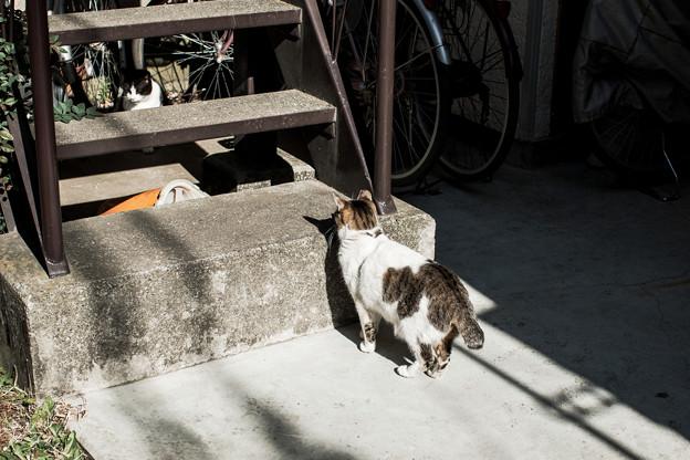 猫撮り散歩2011
