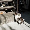 写真: 猫撮り散歩2011