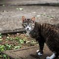 写真: 猫撮り散歩2017