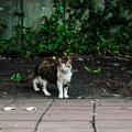 写真: 猫撮り散歩2020