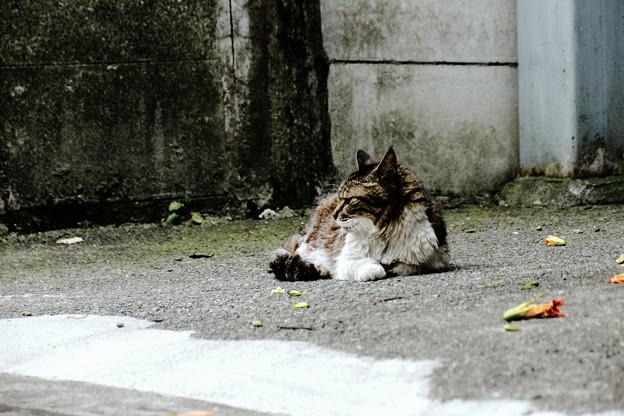 猫撮り散歩2021