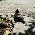 猫撮り散歩2022