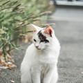 猫撮り散歩2038