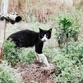 猫撮り散歩2039