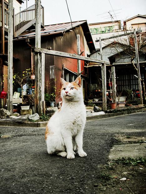猫撮り散歩2044