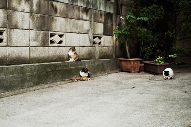 猫撮り散歩2047