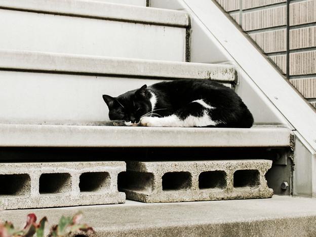 猫撮り散歩2048