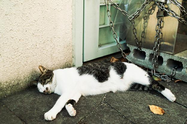猫撮り散歩2049