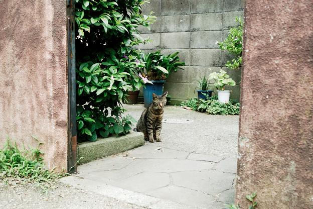 猫撮り散歩2070