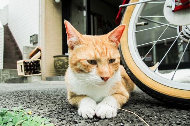 猫撮り散歩2071
