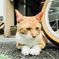写真: 猫撮り散歩2071