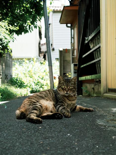 猫撮り散歩2073