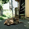 写真: 猫撮り散歩2073