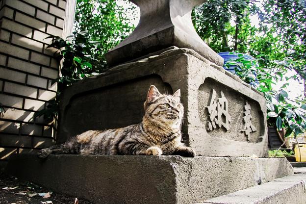 写真: 猫撮り散歩2075