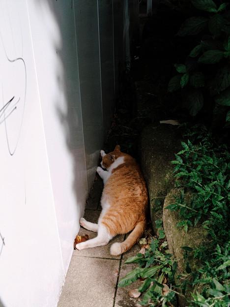 猫撮り散歩2076