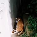 写真: 猫撮り散歩2076