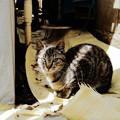 写真: 猫撮り散歩2077