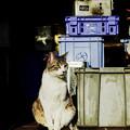 写真: 猫撮り散歩2078