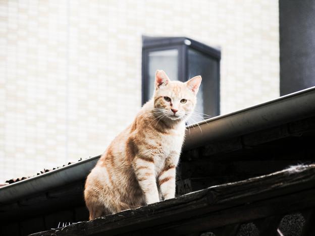 猫撮り散歩2081