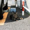 写真: 猫撮り散歩2087