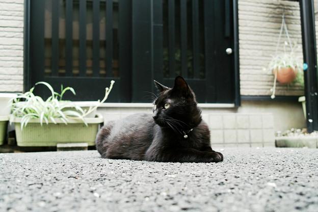 猫撮り散歩2094