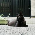 写真: 猫撮り散歩2094