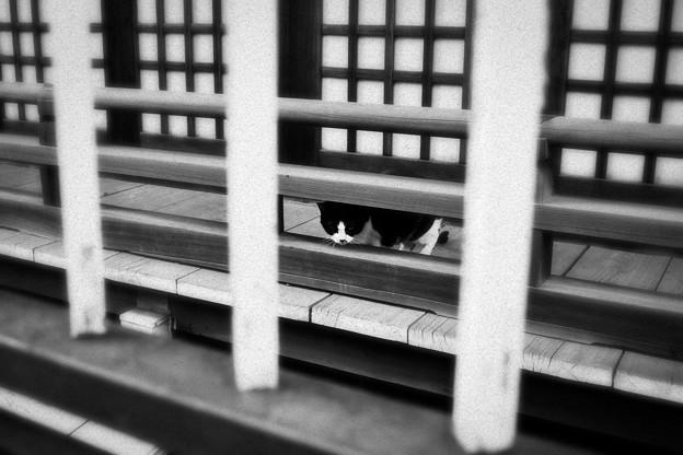 猫撮り散歩2097