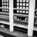 写真: 猫撮り散歩2097
