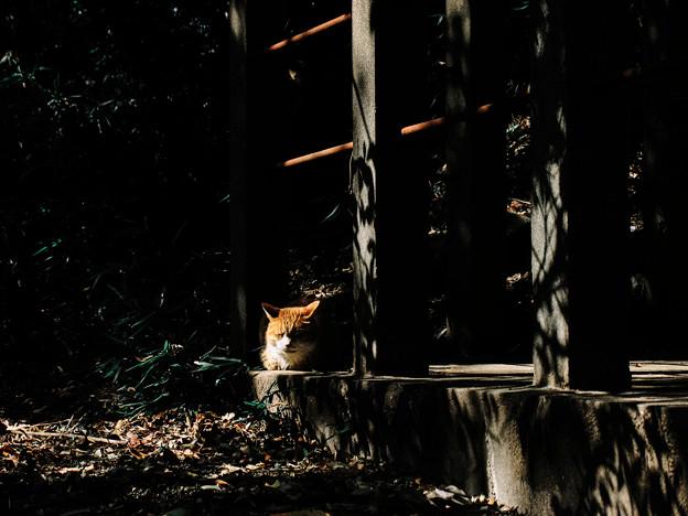猫撮り散歩2100