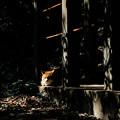 写真: 猫撮り散歩2100