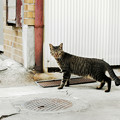写真: 猫撮り散歩2101