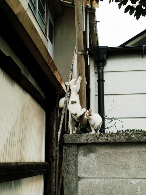 猫撮り散歩2102