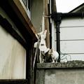 写真: 猫撮り散歩2102