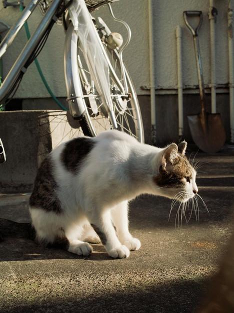 猫撮り散歩2105