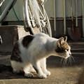 写真: 猫撮り散歩2105