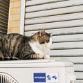 写真: 猫撮り散歩2107