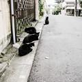 写真: 猫撮り散歩2109