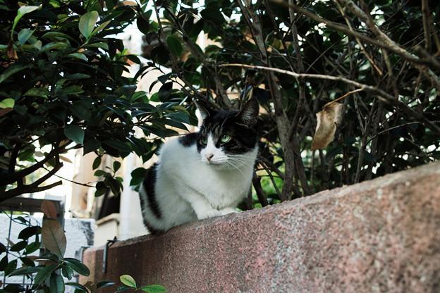 猫撮り散歩2111