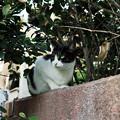 写真: 猫撮り散歩2111