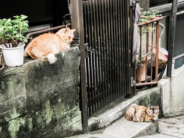 猫撮り散歩2112