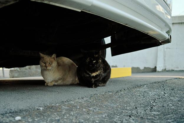 猫撮り散歩2114