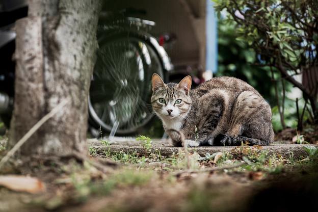 猫撮り散歩2121