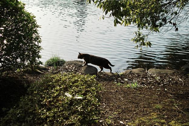 猫撮り散歩2126