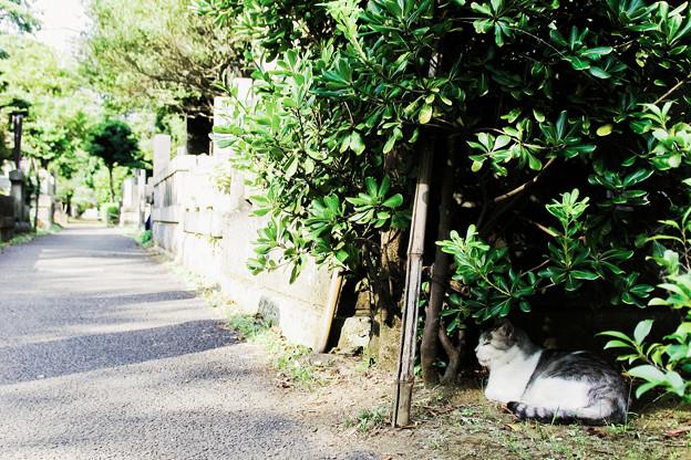 猫撮り散歩2127