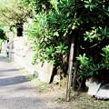 Photos: 猫撮り散歩2127