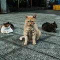 写真: 猫撮り散歩2129