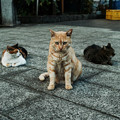 Photos: 猫撮り散歩2129