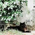 猫撮り散歩2131